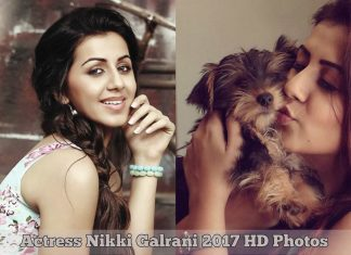 Actress Nikki Galrani HD Photos