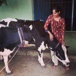 Bindu Madhavi, cow, village