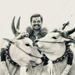 Kadaikutty Singam, karthi, cow race, maadu