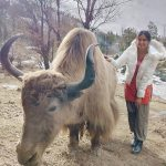 Adah Sharma, cow, outing